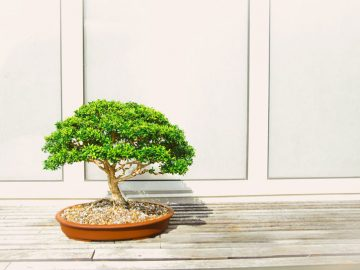 Best Artificial Bonsai Tree