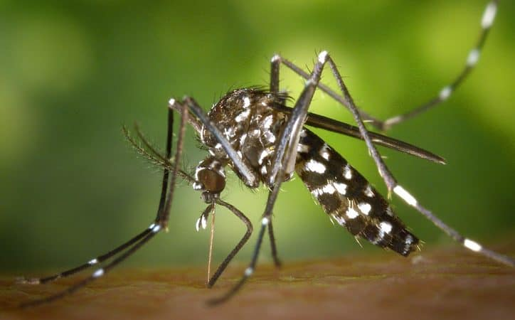 5 Best Mosquito Killer in India – Reviews & Buying Guide (2019)