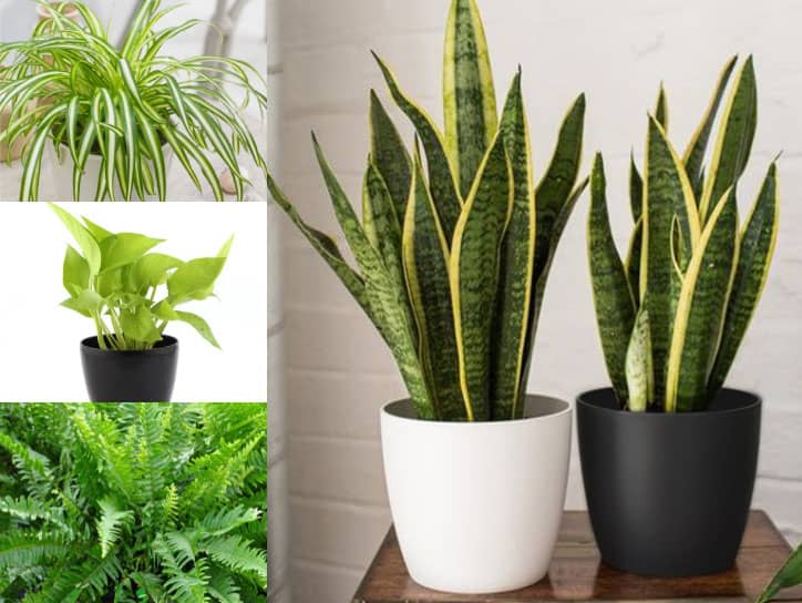 Best Air Purifying Plants
