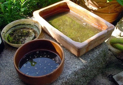 Check Sources of Stagnant Water