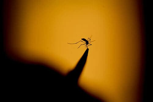 Stay Indoors After Sunset to Avoid Mosquitoes