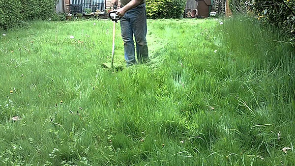 Trim Plants and Grass